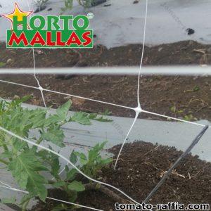 lattice network placed in a tomato plant